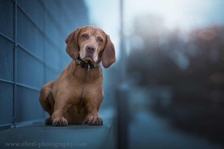 German Summer by Christoph Eberl on 500px.com