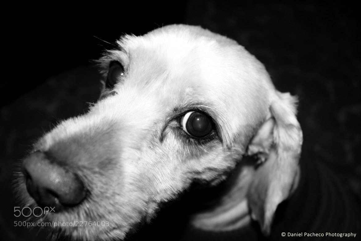Photograph Tom... my good old friend by Daniel Pacheco on 500px