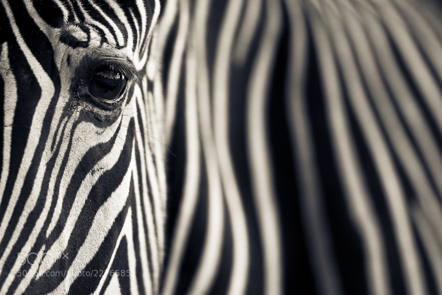Photograph Eye & Stripes by Mario Moreno on 500px