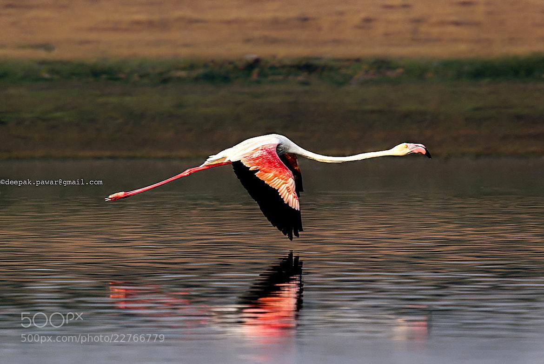 Photograph Thrust enough╰┻ by Deepak Pawar on 500px