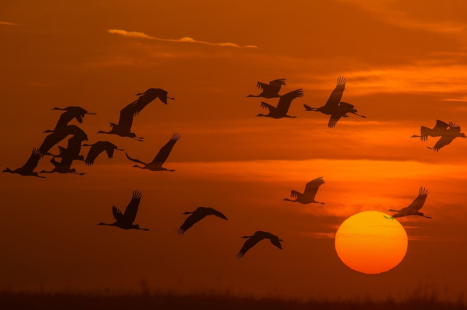 Photograph flying past shadows by Andy 58 on 500px