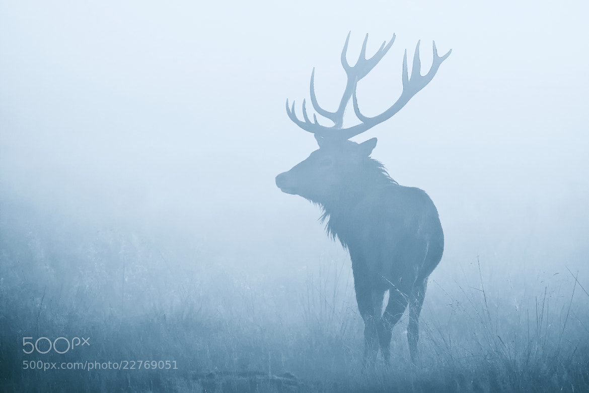 Photograph baby blue by Mark Bridger on 500px