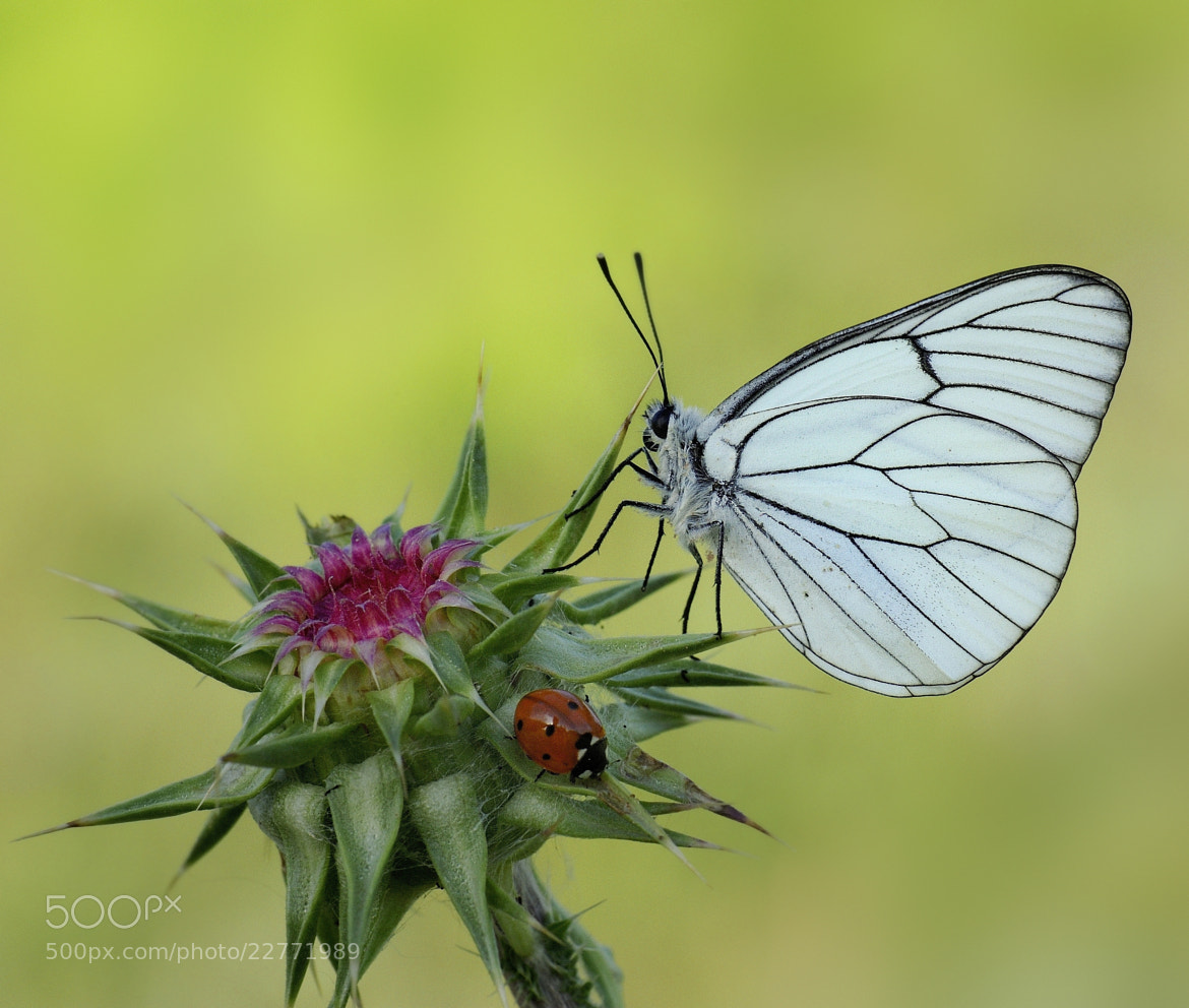 Photograph the elegance of nature by mauro maione on 500px