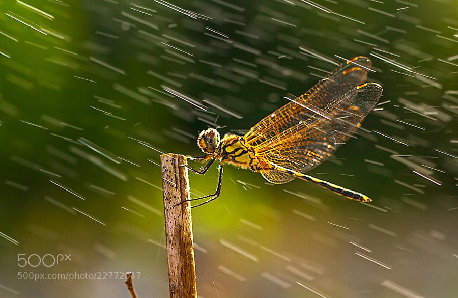 Photograph Under the Rain by Liza Rosalina on 500px