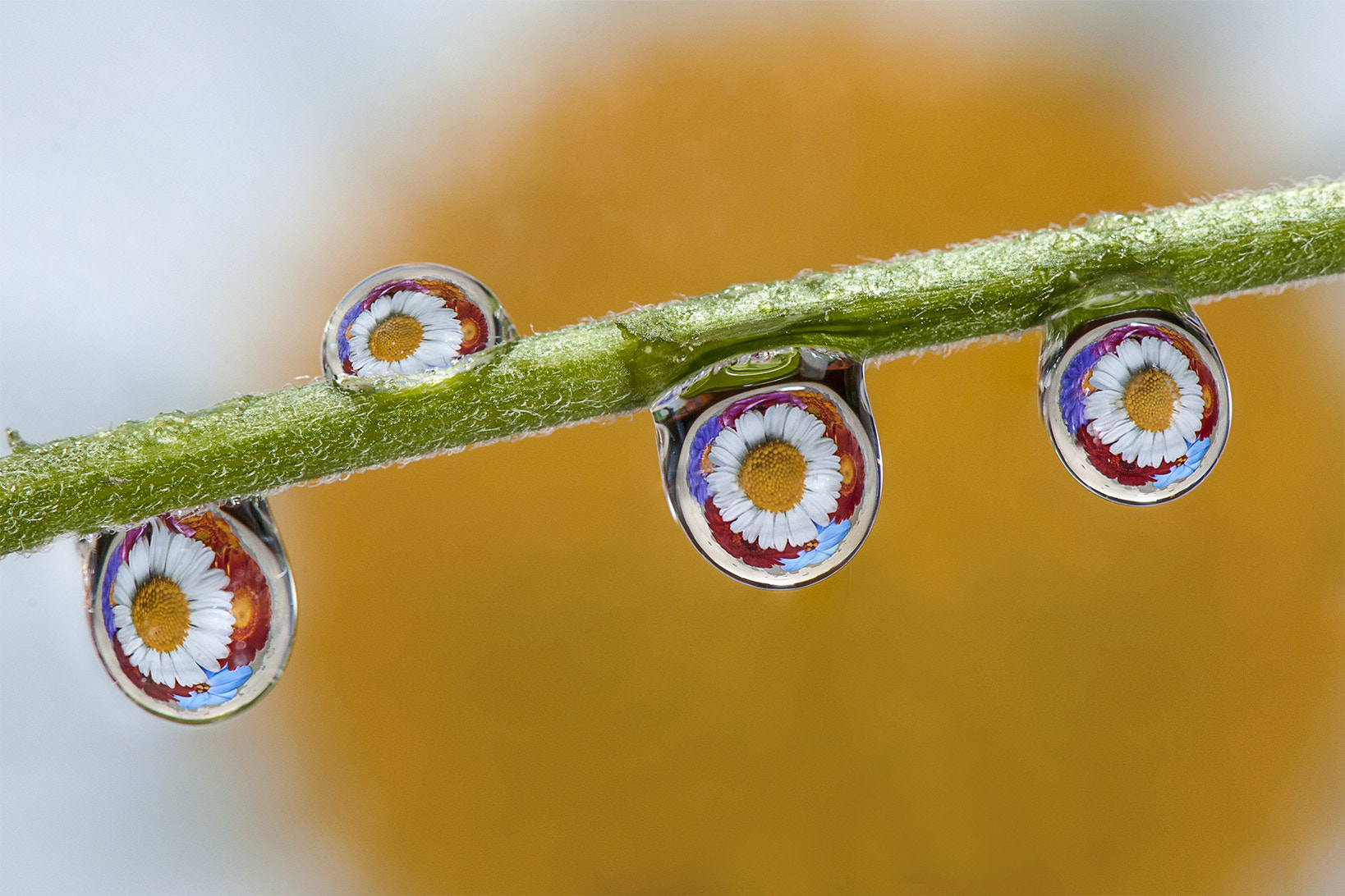 Photograph Drops Of Colour by Dave Wood on 500px