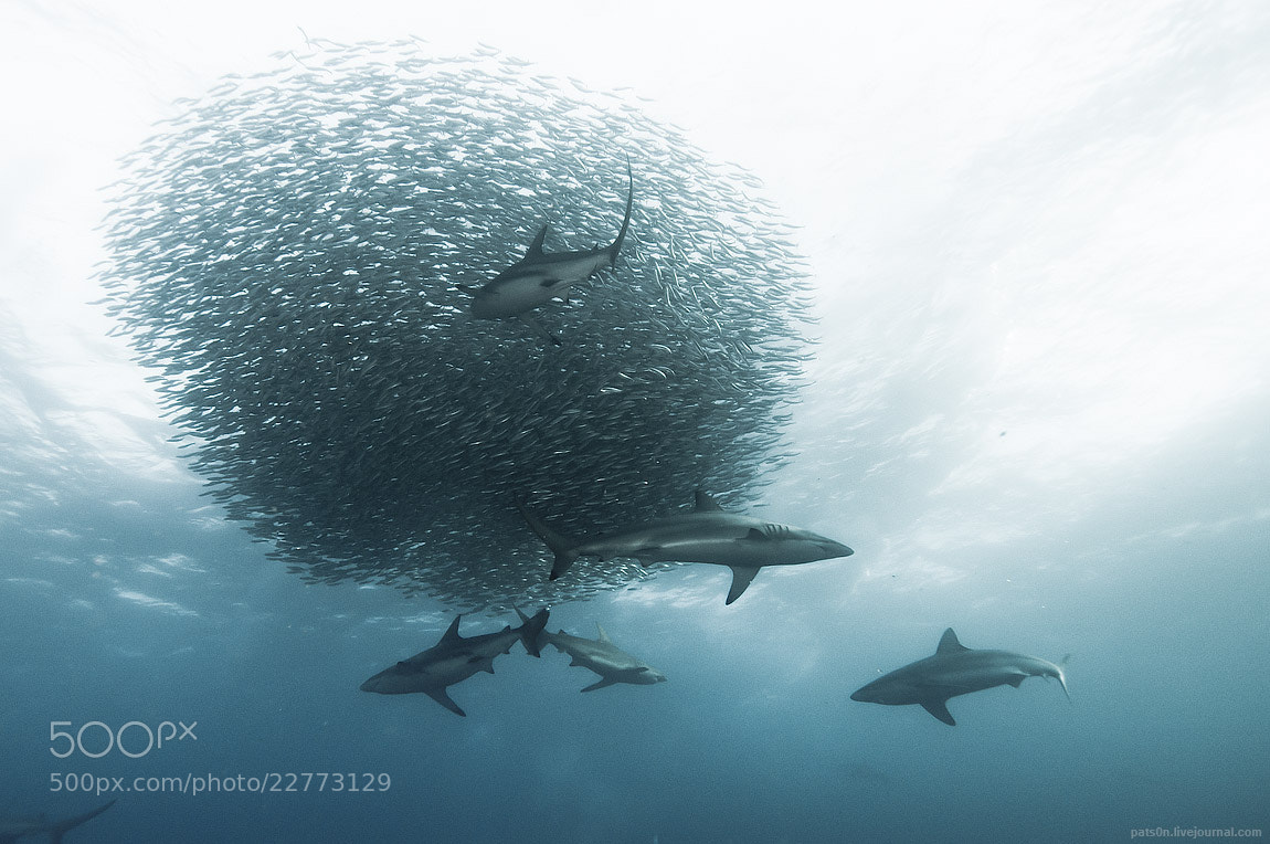 Photograph sardine wars ep. IV by Alexander Safonov on 500px
