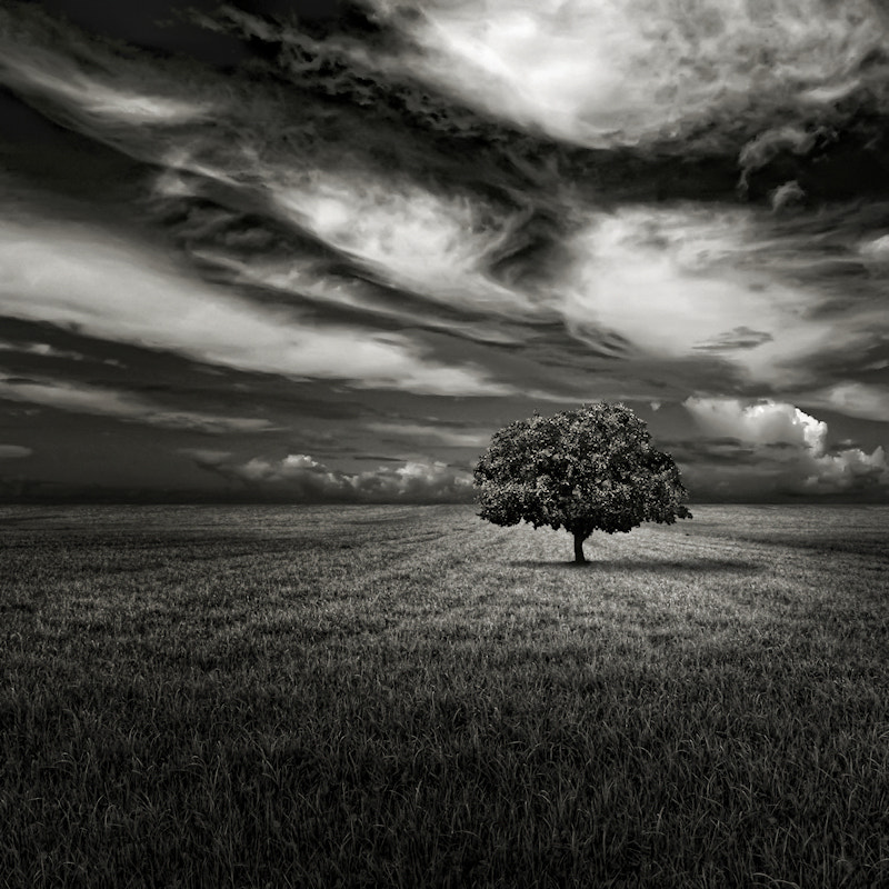 Photograph Alone and Colorless by Carlos Gotay on 500px