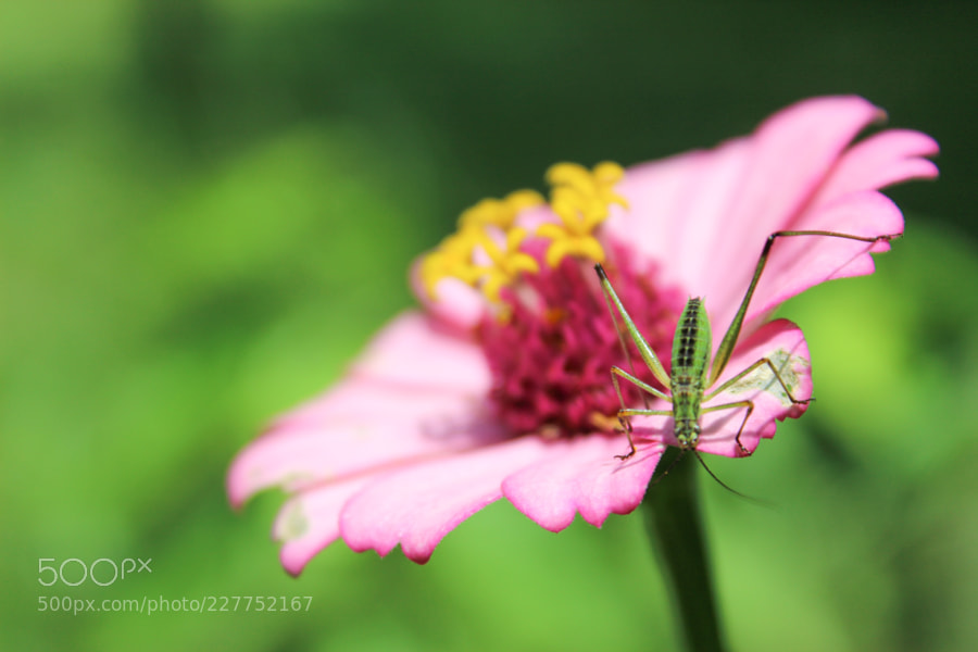 An insect sitting on a flower