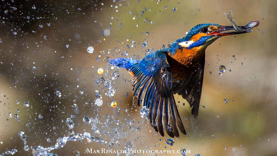 Show Time by Max Rinaldi on 500px.com