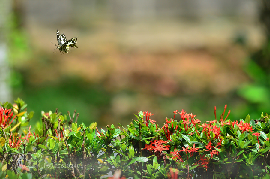 Photograph Airborne - 2 by Khoo Boo Chuan on 500px