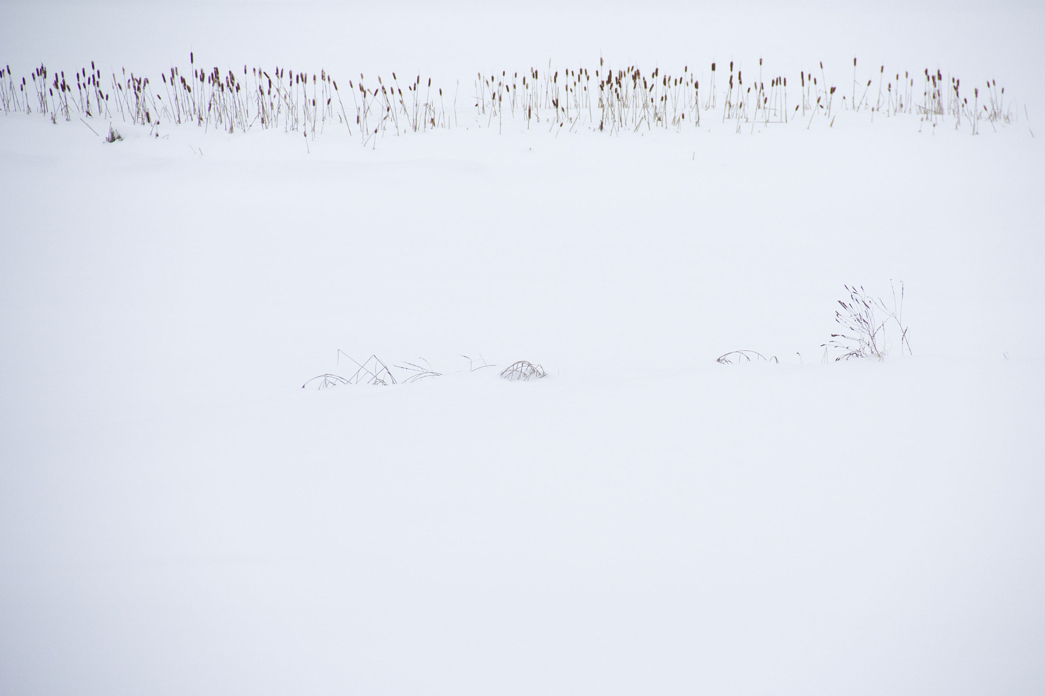Photograph Cattails In The Snow by Amelie Belanger on 500px