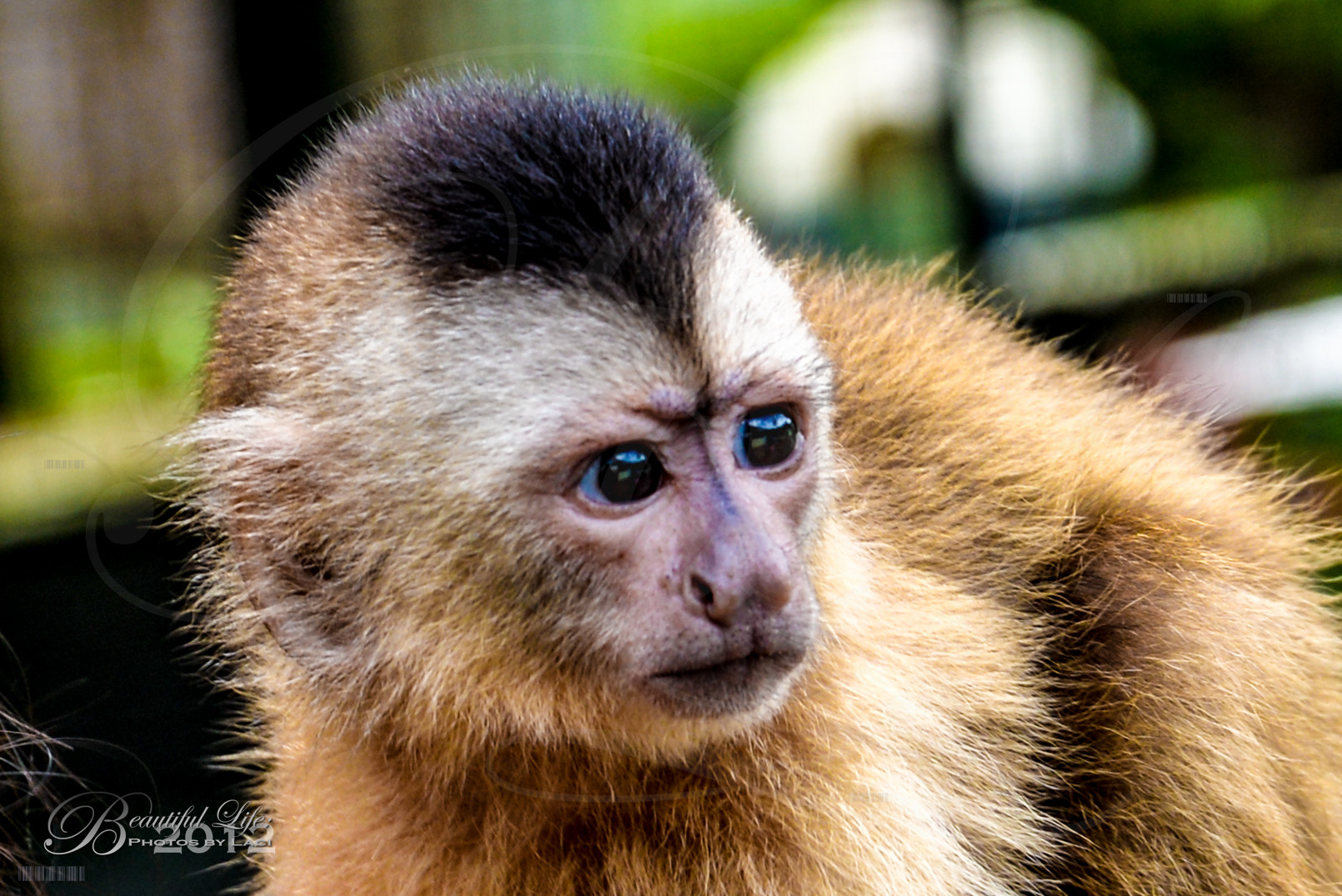 Photograph Monkey  by Laci Meixner on 500px