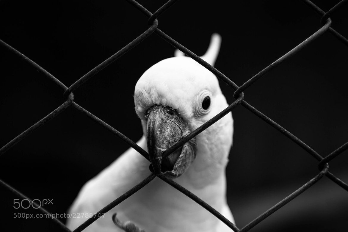 Photograph Flirting parrot by Edouard Lallemand on 500px