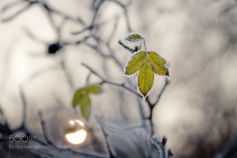Photograph Leaf by Jenkata  on 500px