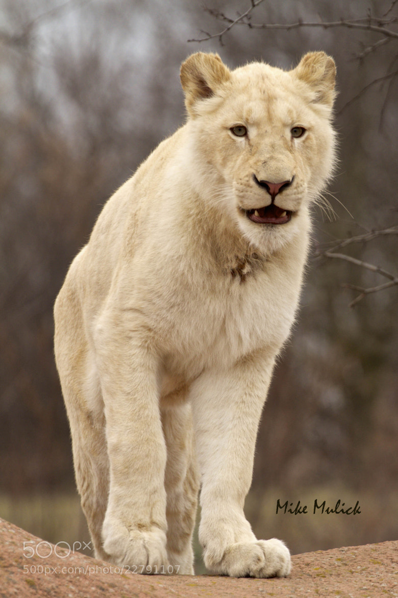 Photograph Makali by Mike Mulick on 500px
