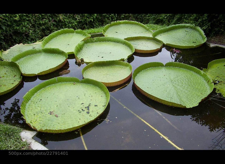 Photograph 1.3 Mega Pixels by Sivakumar Gopalakrishnan on 500px