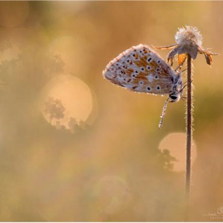 blue - butterfly ;-)