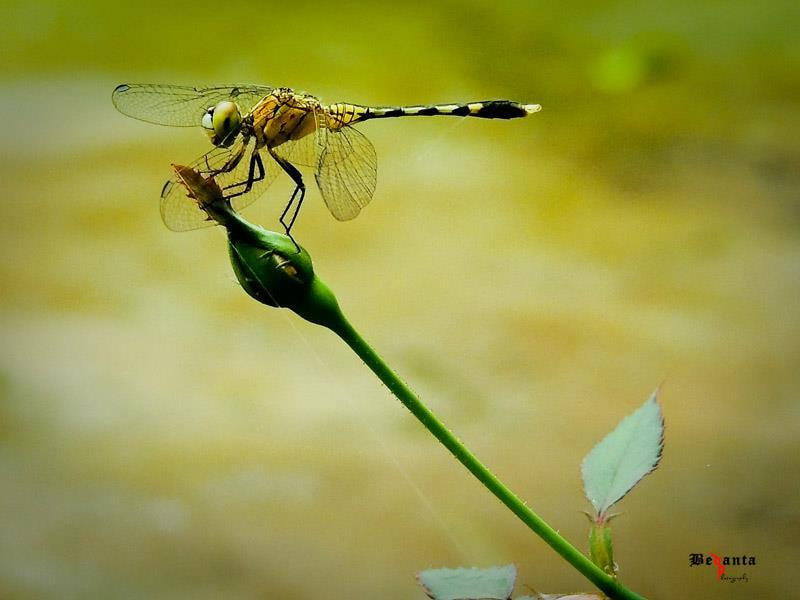 Photograph Stable by Bedanta Thakuria on 500px