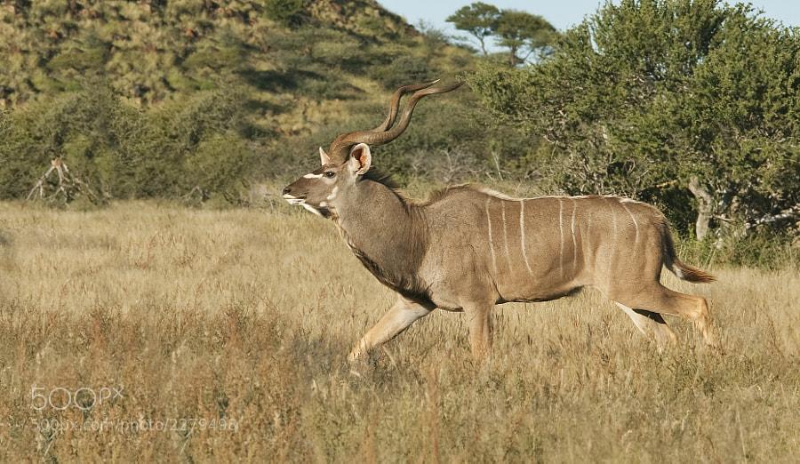 Taken in Mokola National Park, South Africa, 29th April 2010