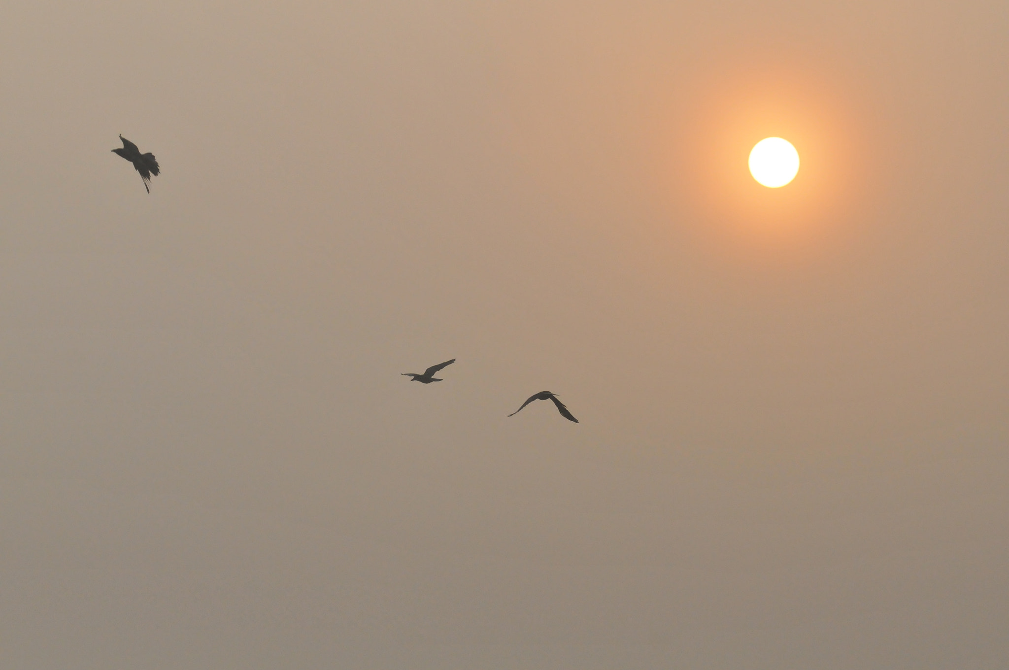 Photograph Sun rise in the mist by mayur gogoi on 500px
