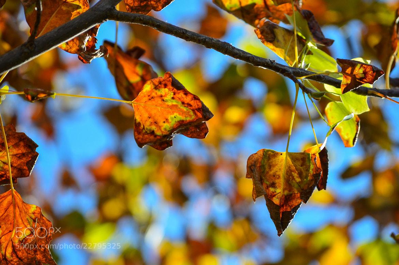 Photograph Autumn Colors by ilias nikoloulis on 500px