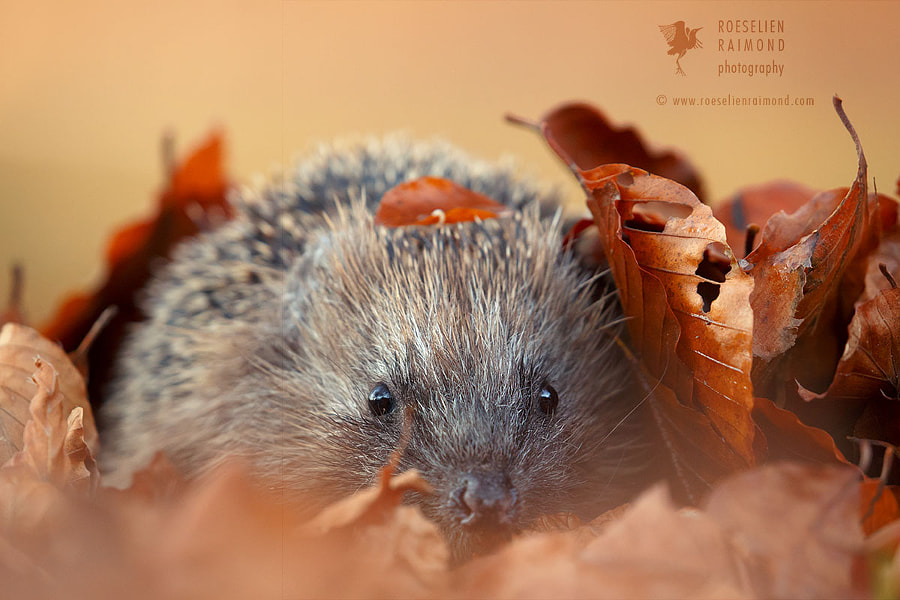 Autumn is Coming by Roeselien Raimond on 500px.com
