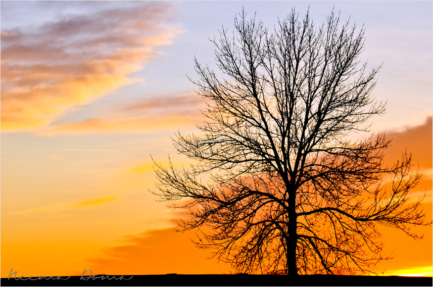 Photograph winter Tree  by Neema Doma on 500px