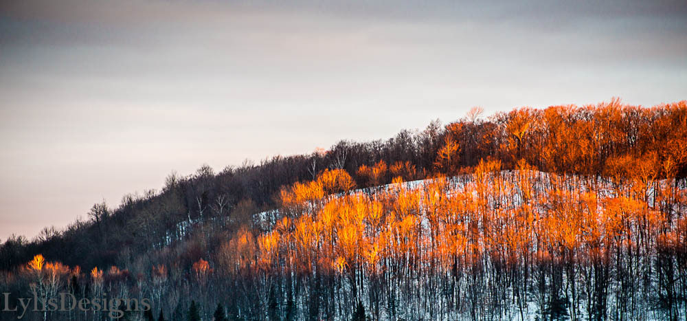 Photograph morning oranges by Lylis Designs on 500px