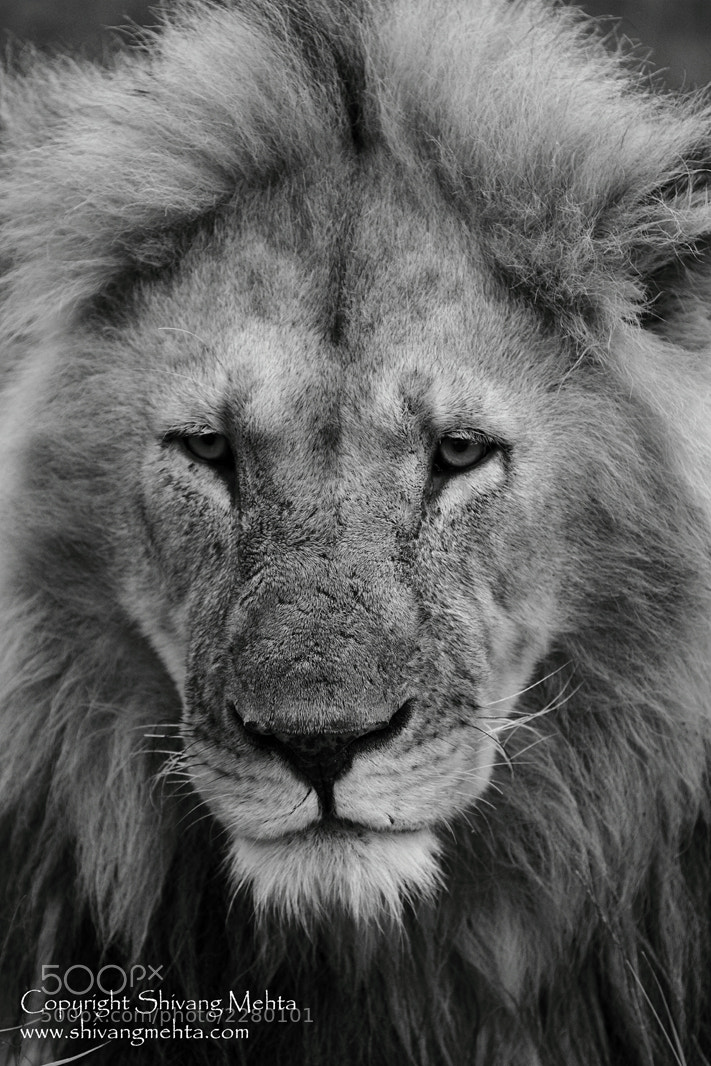 Photograph The King of Mara by Shivang Mehta on 500px