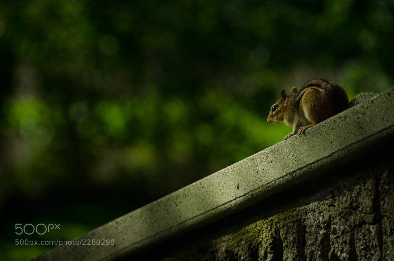 Photograph the wait by Sriram Boothalingam on 500px