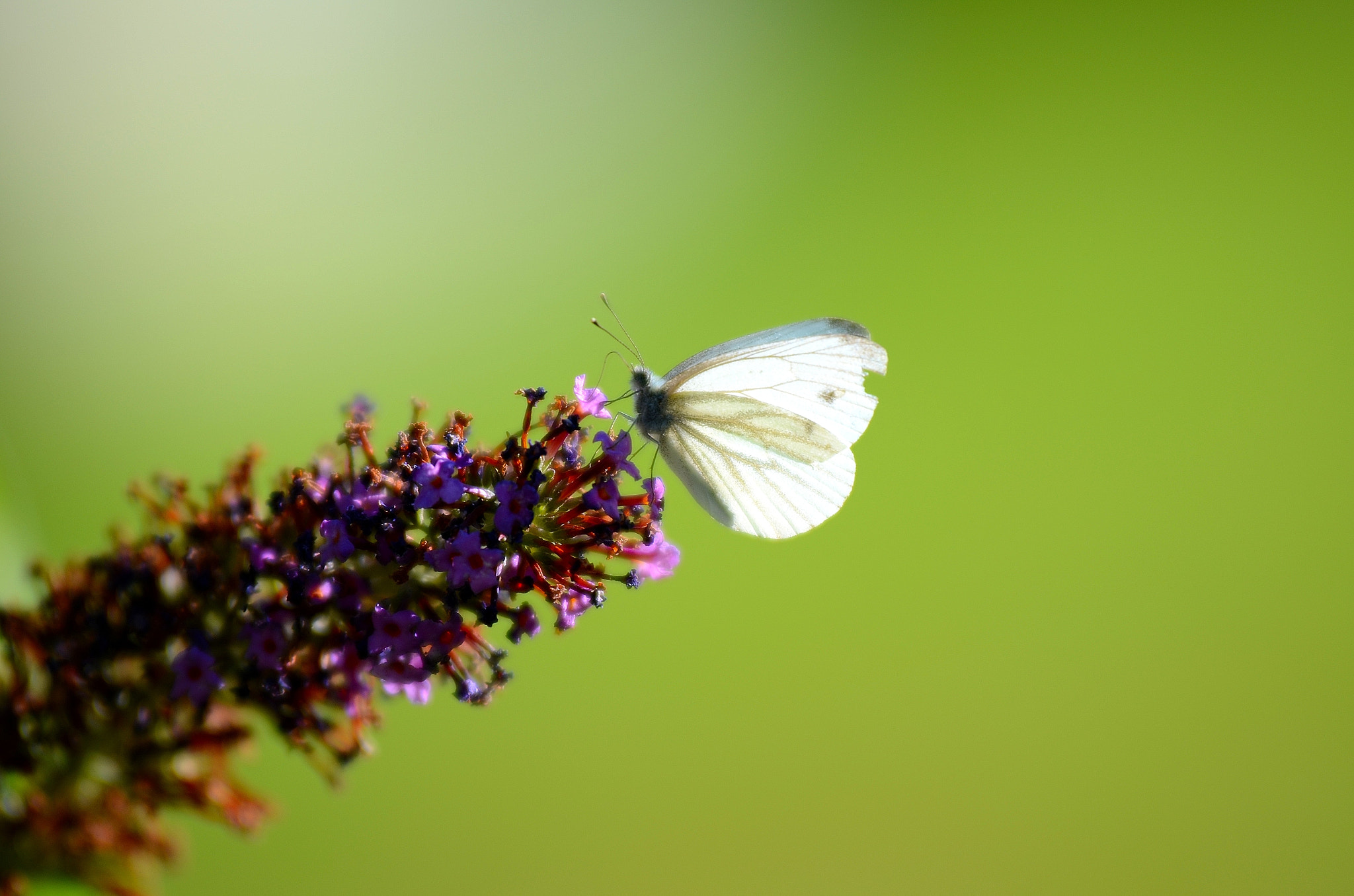 Photograph Schmetterling by Michael Bellenberg on 500px
