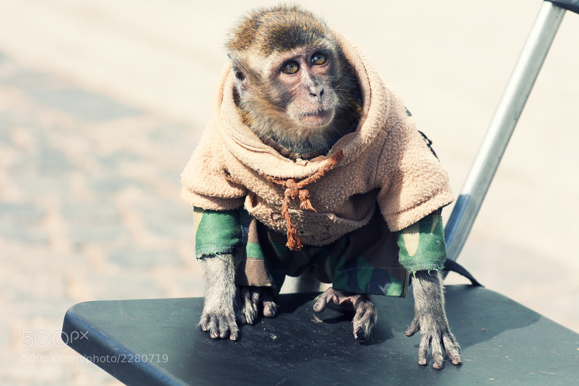 Photograph funny monkey by Ludmila Kravchuk on 500px