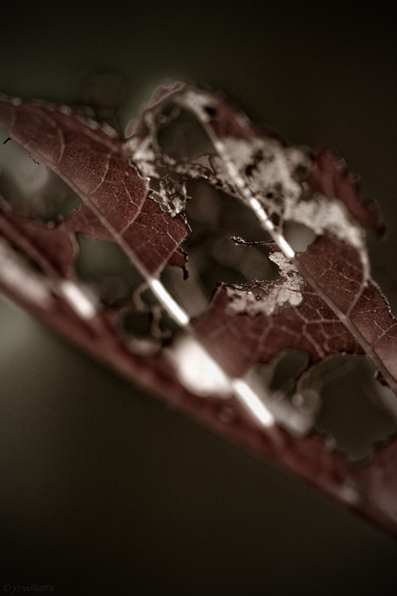 Photograph DECAY by jo williams on 500px