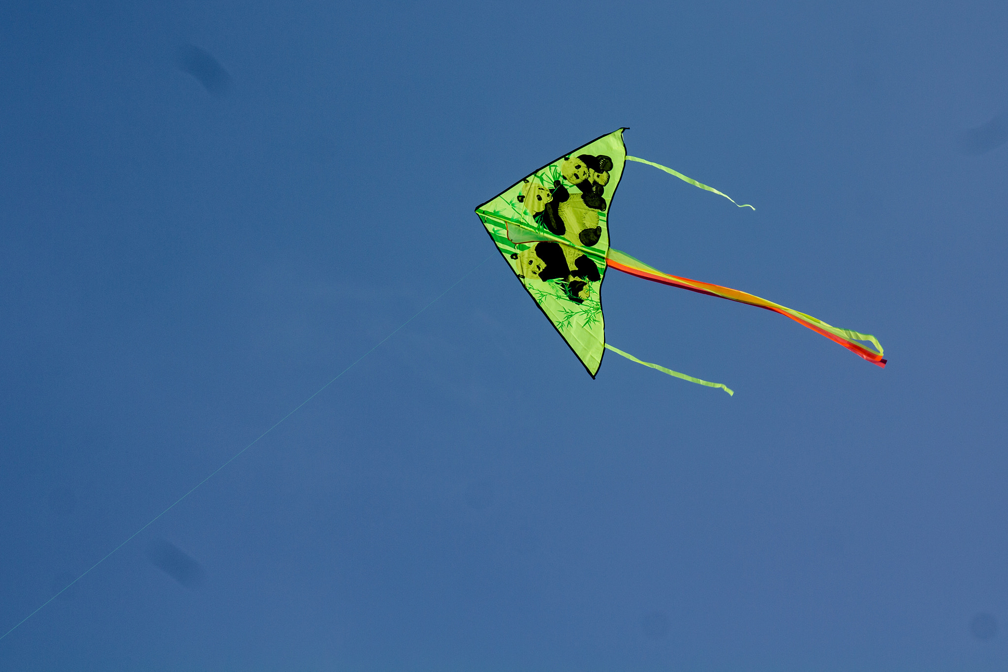 Photograph King Kite by Subhajit Paul on 500px