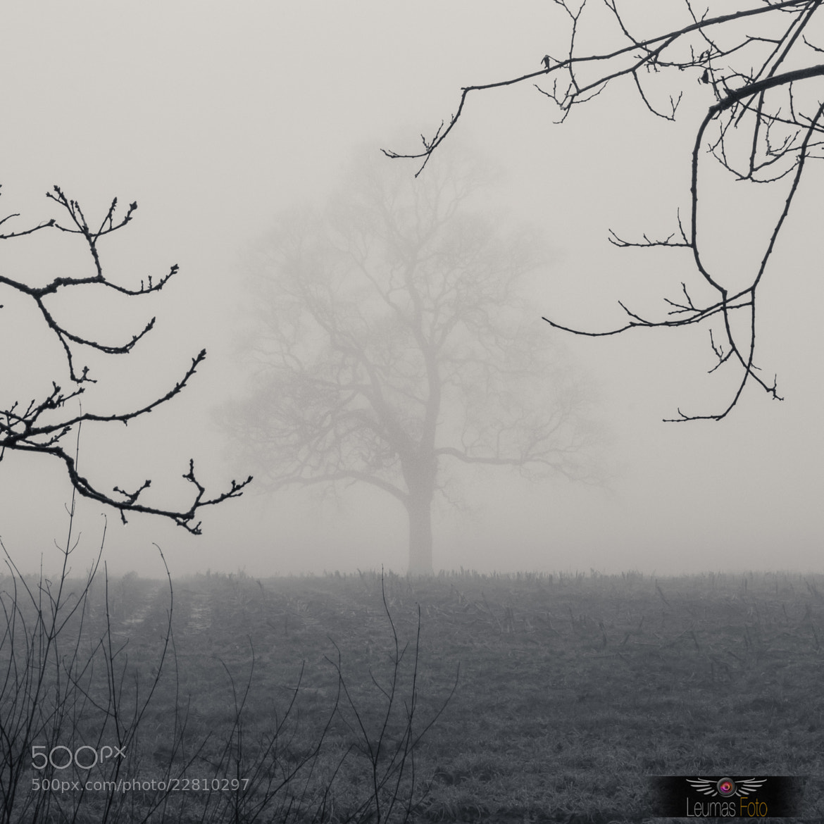 Photograph Tree on a Foggy Day by Sam Bentley on 500px