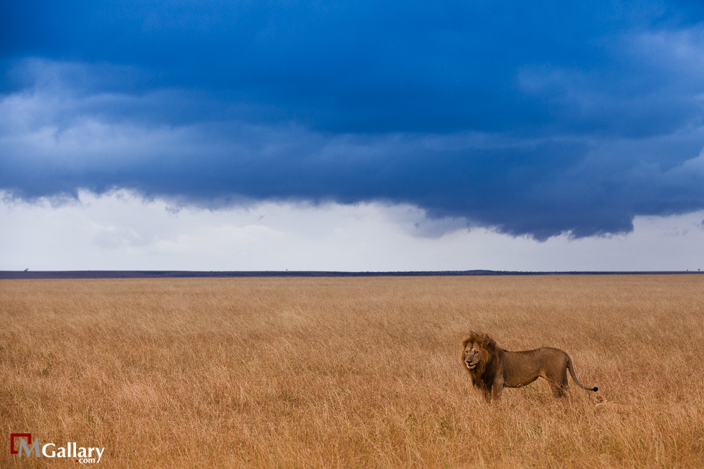 Photograph African King by Dr.Mohammed Alkandari on 500px