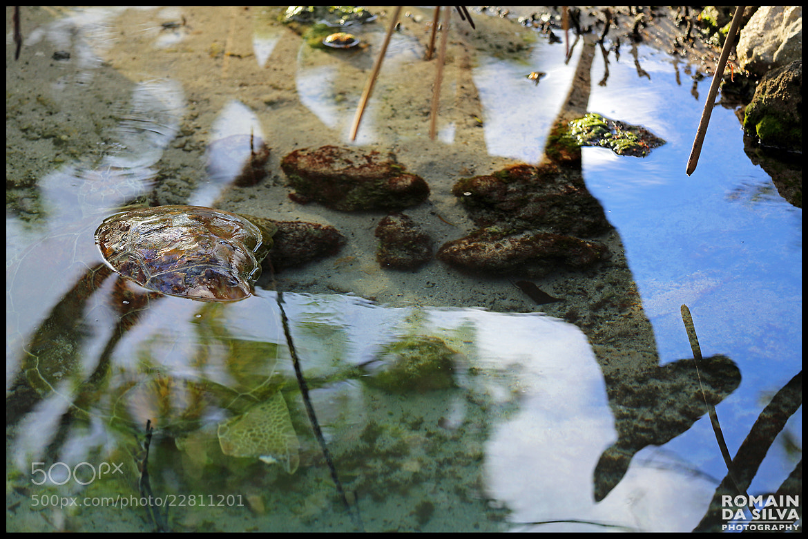 Photograph Deer and turtle discovery by Romain Da Silva on 500px