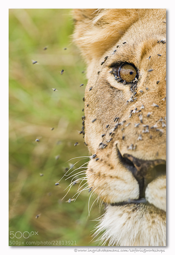 Photograph Survival by Ingrid Vekemans on 500px