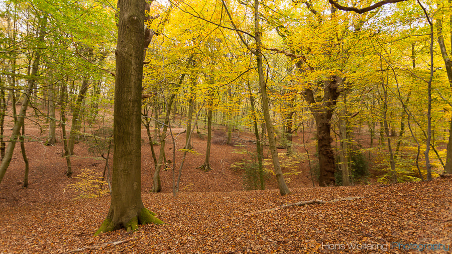 Photograph Autumn by Hans Woltering on 500px