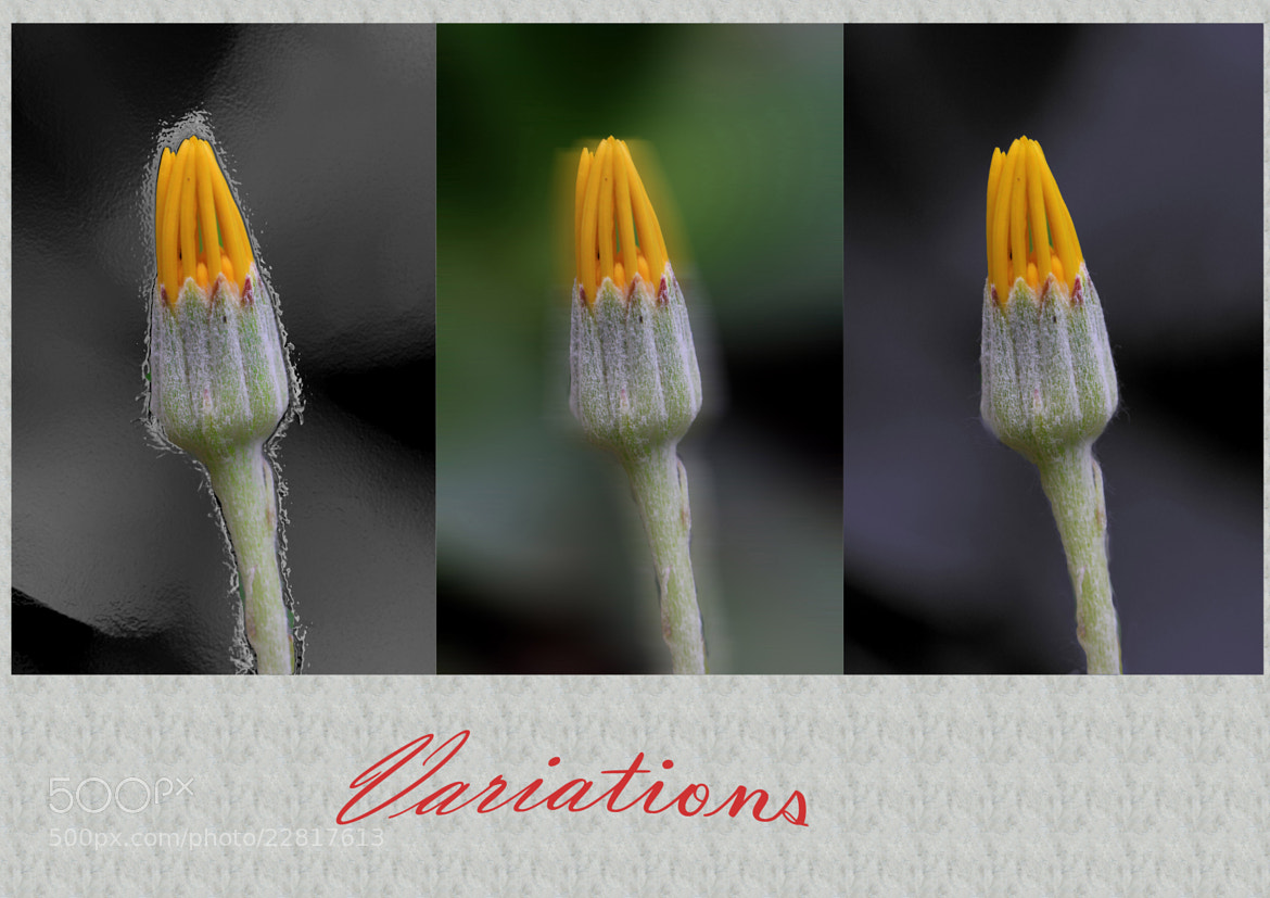 Photograph variations by Ralf Muhl on 500px