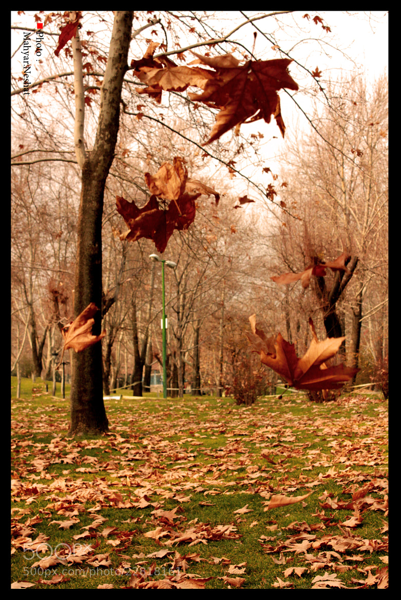 Photograph autumn  by Mahyar Neshat on 500px
