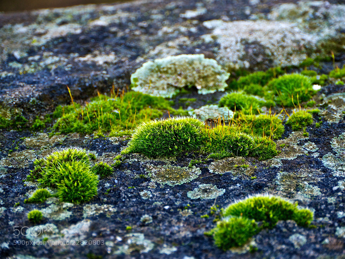 Photograph Moss Theory Punk Derivative by Felipe Carral on 500px