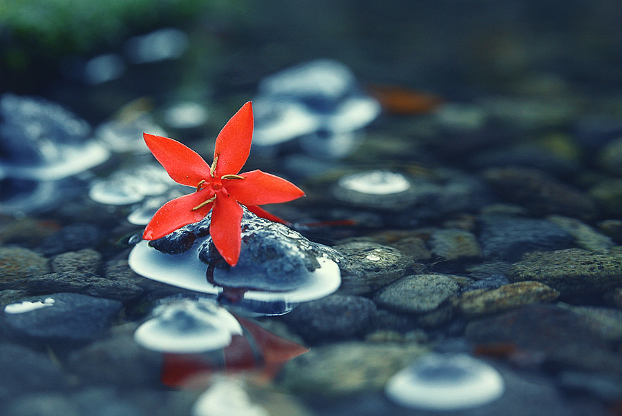 Photograph lying on the stones by Diens Silver on 500px
