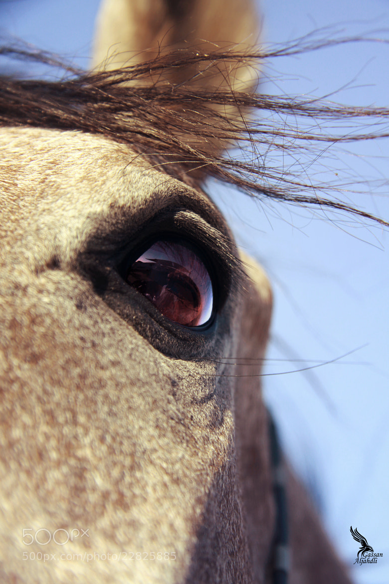 Photograph Magic eyes horse by gassan  on 500px