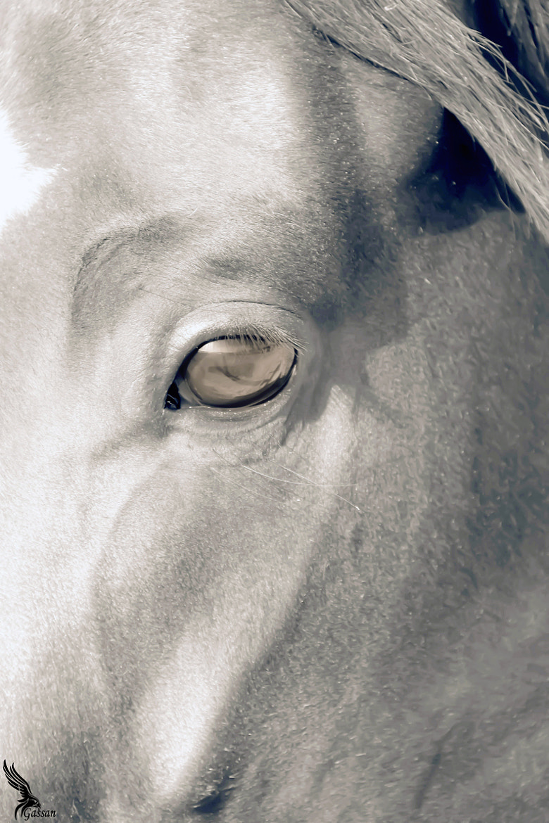 Photograph Magic eyes horse2 by gassan  on 500px
