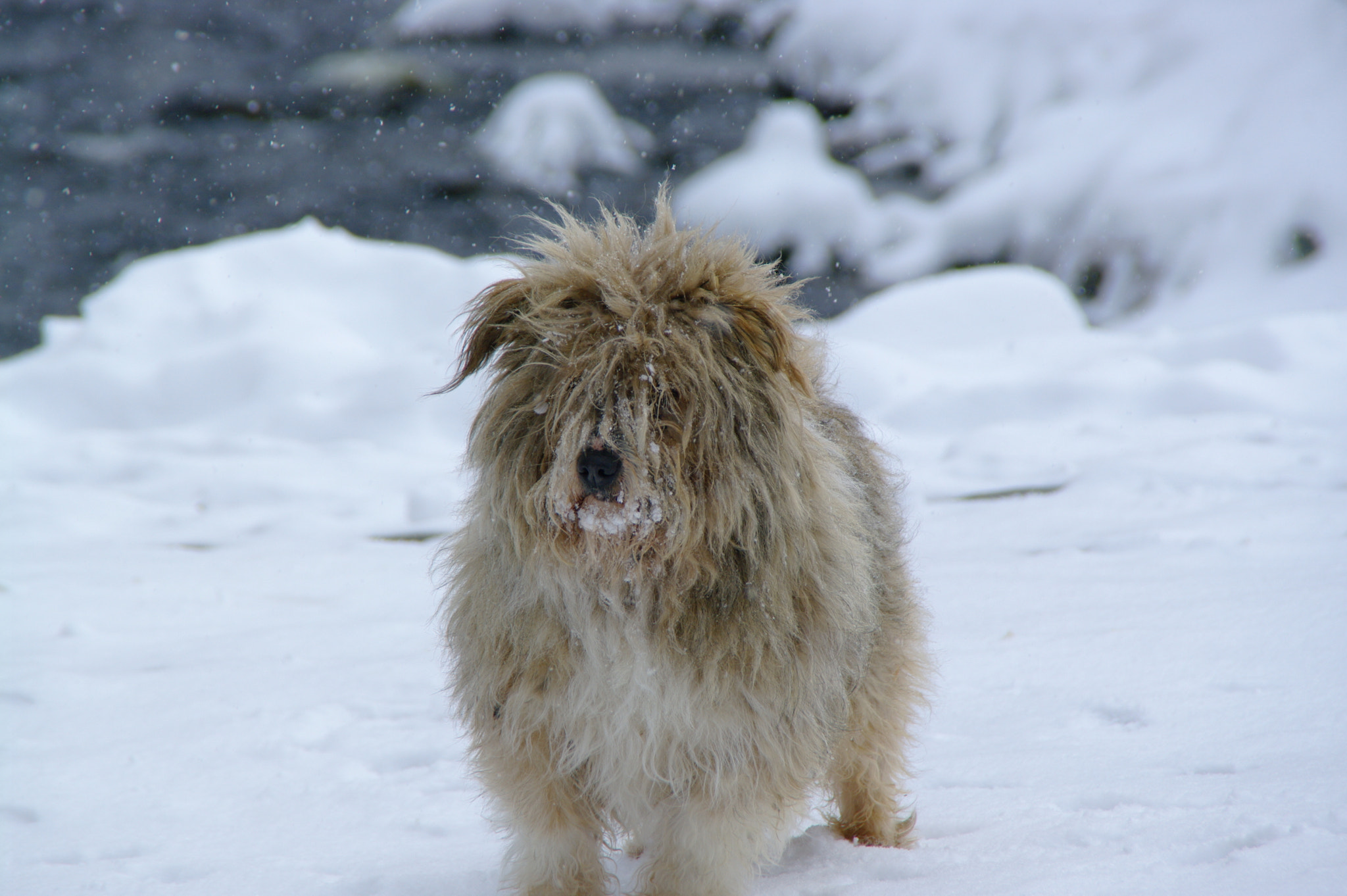 Photograph Frozen puppy by andreyanghel on 500px