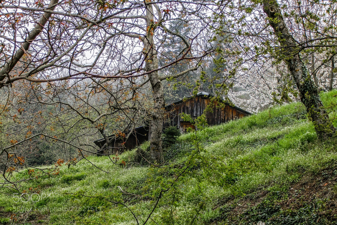 Photograph The Cabin in the Woods by ilias nikoloulis on 500px