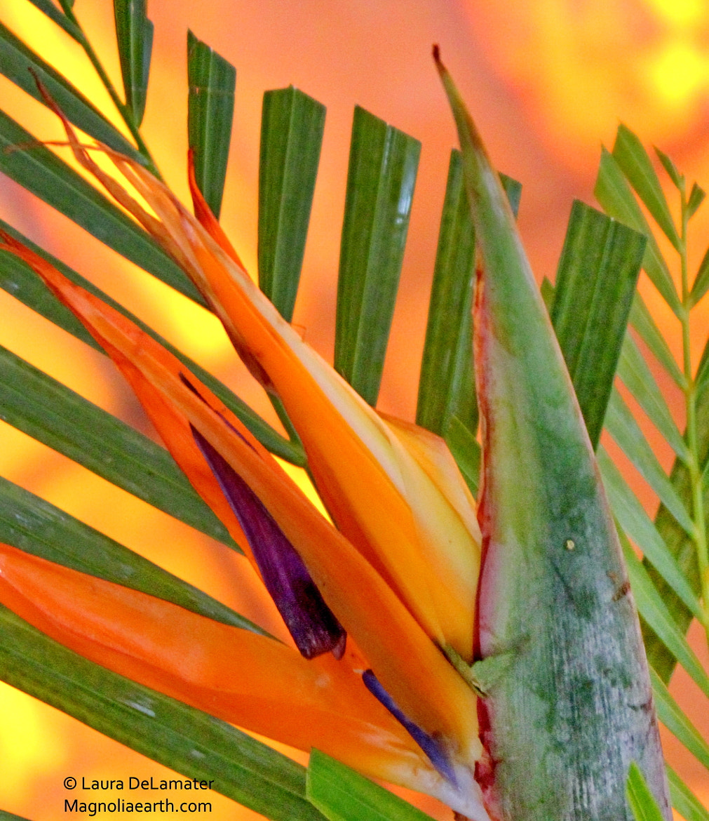 Photograph Paradise Palms by Laura DeLamater on 500px