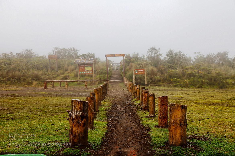 Photograph Stumpy Path by Mahesh Krishnamurthy on 500px