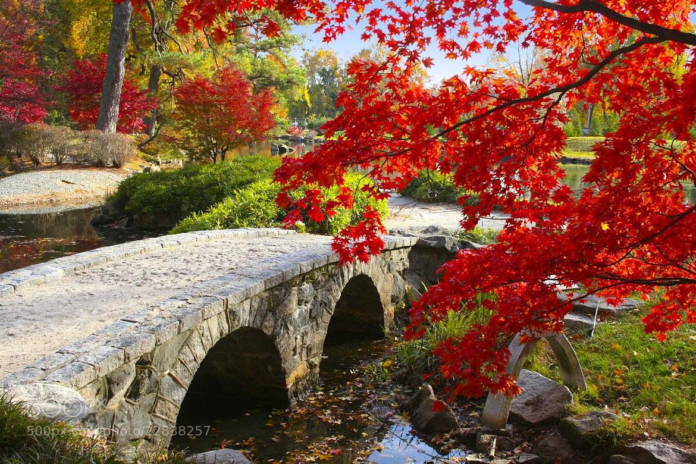 Photograph Stone Bridge by Ed Davis on 500px